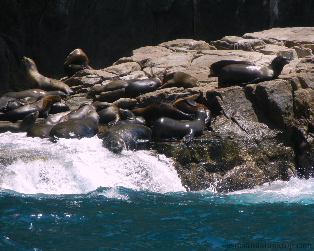Sea Lions of El Arco