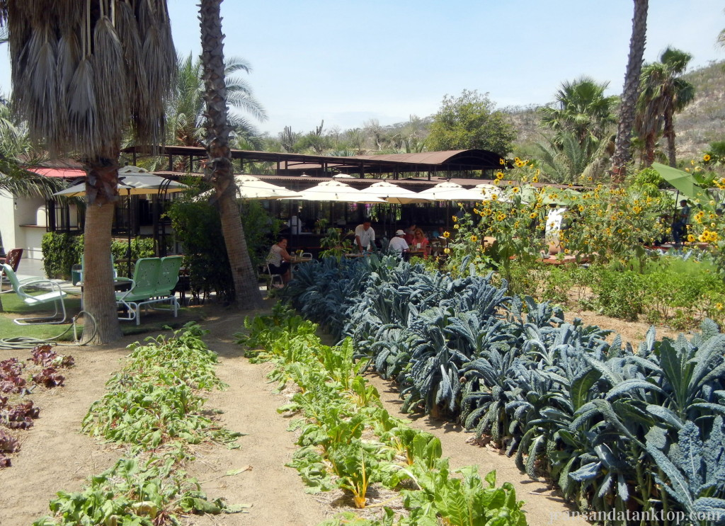 Flora Farm Garden and Field Kitchen