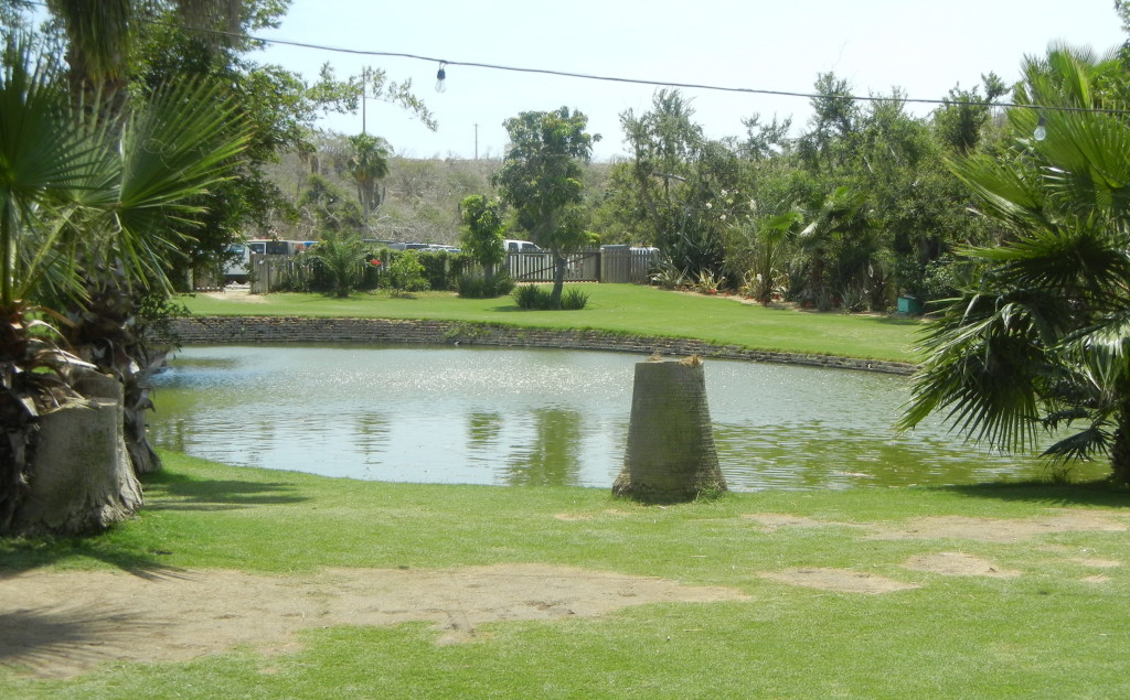 Flora Farm Swimming Pond