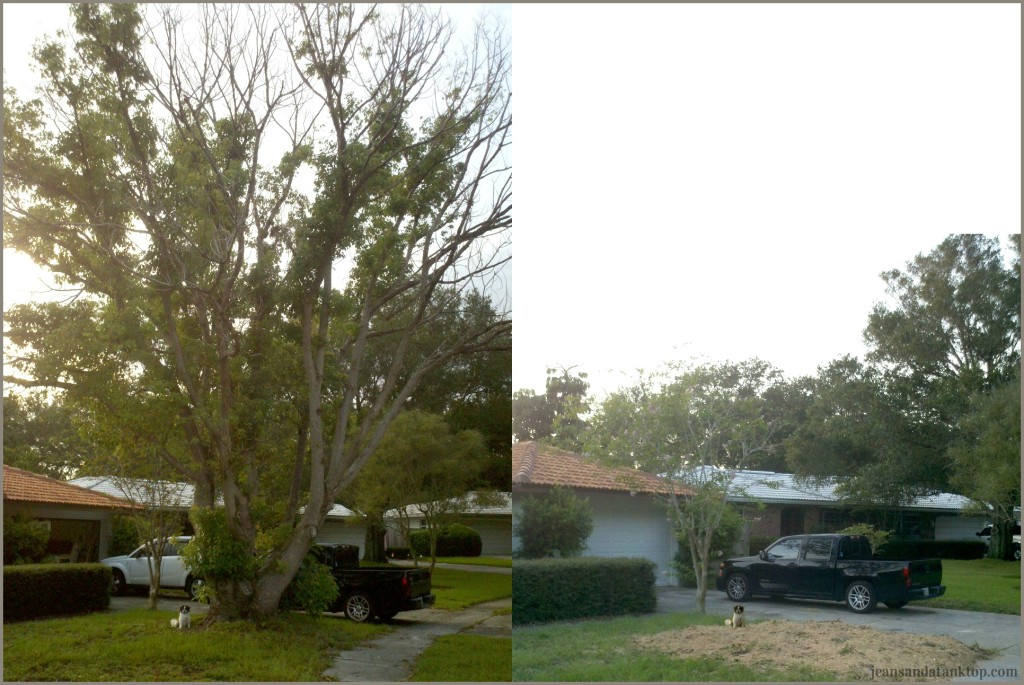 Tree_BeforeAfter