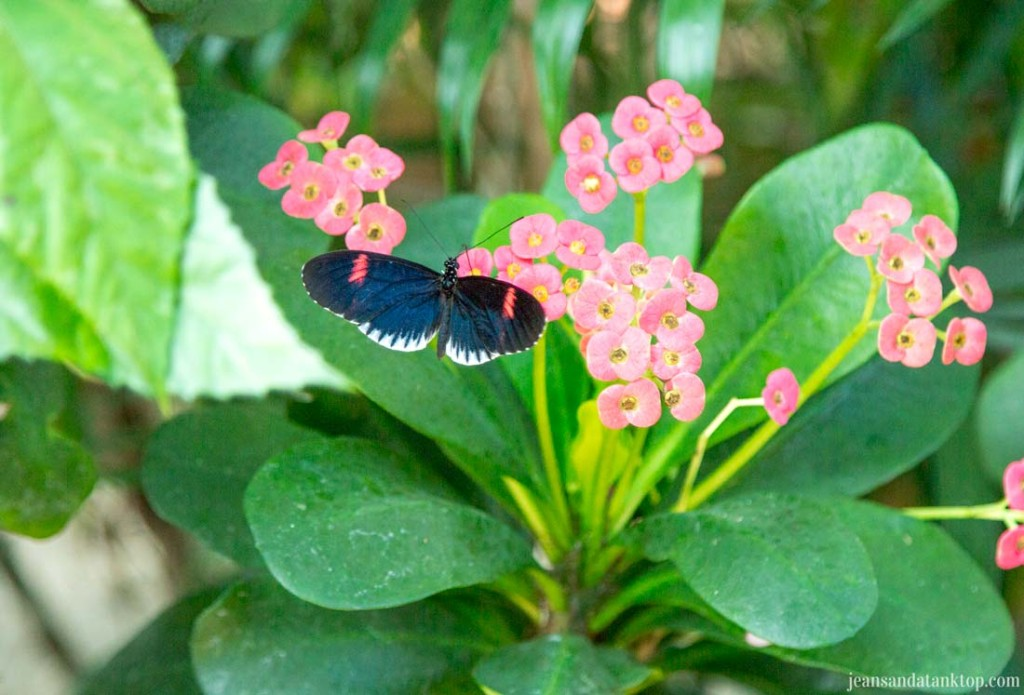 Key-West-Butterfly-Conservatory-Postman